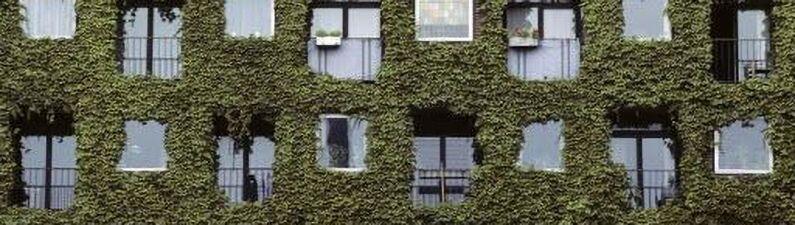 Озеленение дома
