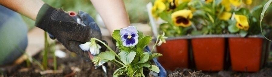 Посадка декоративных растений в Минске